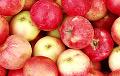 Рассельгаснагляд: Беларусь увозіць у РФ яблыкі, завальваючы іх мяшкамі з бульбай