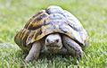 Ученые обнаружили черепаху размером с автомобиль