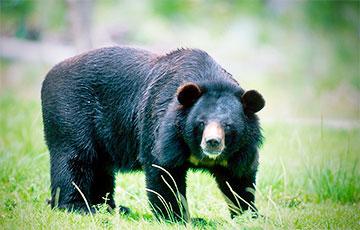 Маленький медведь, решивший искупаться в миске с водой, стал звездой Сети