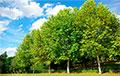 Ученые: Зеленые насаждения помогают избавиться от вредных привычек