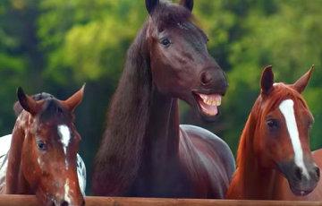 Из России в Беларусь «депортировали» 29 лошадей