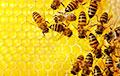 Ученые рассказали, что общего у человек и пчелы