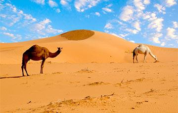 Ученые: Сахара раньше была морем с гигантскими существами на планете