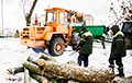 Trees Are Cut Down Again In Minsk Square Katouka