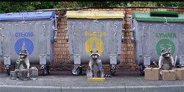 Белорусы сняли видеохит: Еноты-барабанщики сортируют мусор