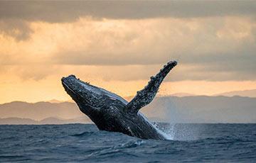 Встреча каякера и трех китов стала хитом в Сети