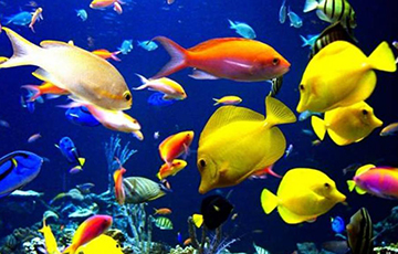 Ministry Of Agriculture Ordered Maintenance Of Aquarium For 1,000 Euros
