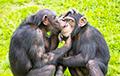 Ученые: Речь могла возникнуть из-за желания млекопитающих звучать брутальнее