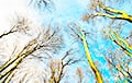 Зіма ў Беларусі: гусі прыляцелі, дачнікі сеюць моркву