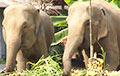 Відэафакт: У расейскім горадзе лавілі сланоў, якія ўцяклі з цырка «на волю»