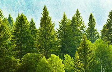 18-гадовы паляк заблукаў у лесе і выпадкова зайшоў у Беларусь