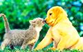 Кто больше предан человеку — кошки или собаки?