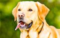 Ученые: Собаки хорошо различают ложь