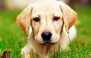 Ученые: 3000 лет назад собаки были «вегетарианцами»