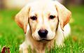 Cтало известно, как пересчитать возраст собак в человеческий