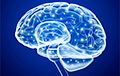 Навукоўцы вылічылі самы прадукцыйны для мозгу ўзрост
