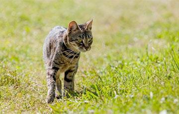 Ученые выяснили, зачем кошки едят мяту и валериану