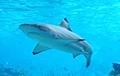 Акулы мешают дайверам поднять со дна клад стоимостью в миллиард долларов