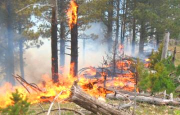 В Сибири увеличивается площадь лесных пожаров