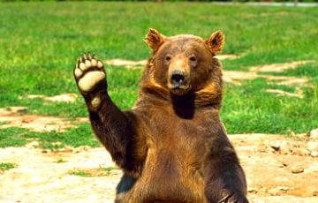 В России разрешили добычу животных из «Красной книги»