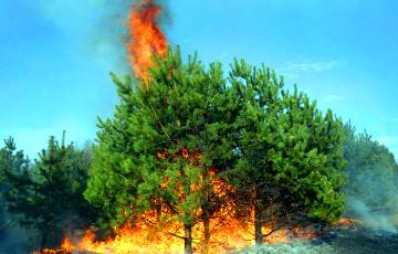 Эрдаган абвесціў Анталлю ды іншыя раёны лясных пажараў зонамі бедства