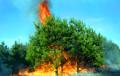 У Сібіры павялічваецца плошча лясных пажараў