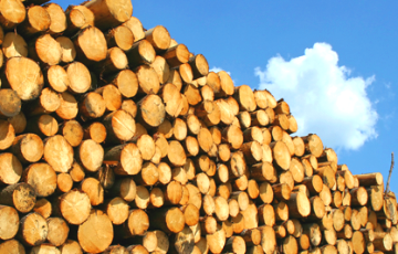 Authorities Take Possession Of Shares Of Woodworking Enterprises