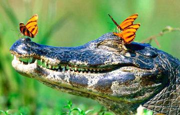 В Египте археологи обнаружили мумию гигантского крокодила
