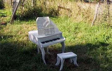 Видеохит: курица исполнила сонату на фортепьяно