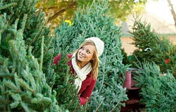 Названы цены на новогодние елки в Минске