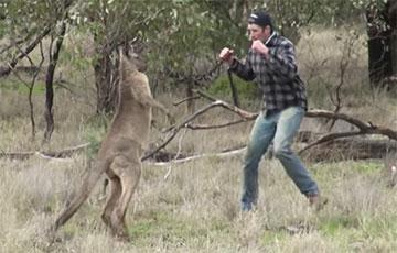 Мужчина отбил собаку у кенгуру. ВИДЕО