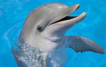 Дэльфін, які грае з медузай стаў зоркай Сеціва