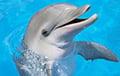 Фотофакт: В Австралии дельфин приносит к берегу подарки, чтобы вернулись туристы