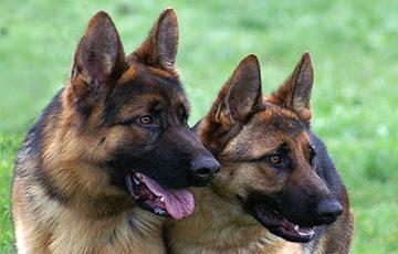 Ученые рассказали, какую пользу для здоровья приносят собаки