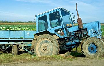 Сельское хозяйство Беларуси нахватало рекордное количество долгов