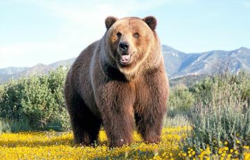 Видеохит: Медведь загнал двух россиян на дерево и караулил их