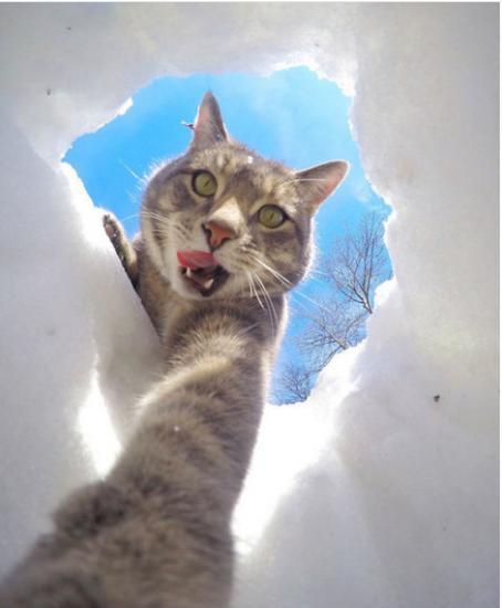 Почему кот стал писать не в лоток - 0cfe