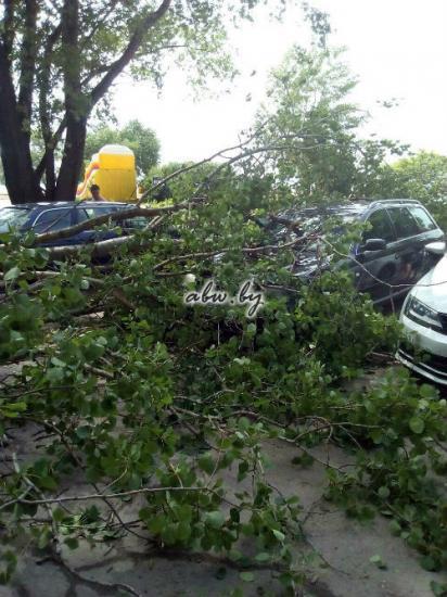 Отдых не удался: на Минском море дерево рухнуло на несколько автомобилей