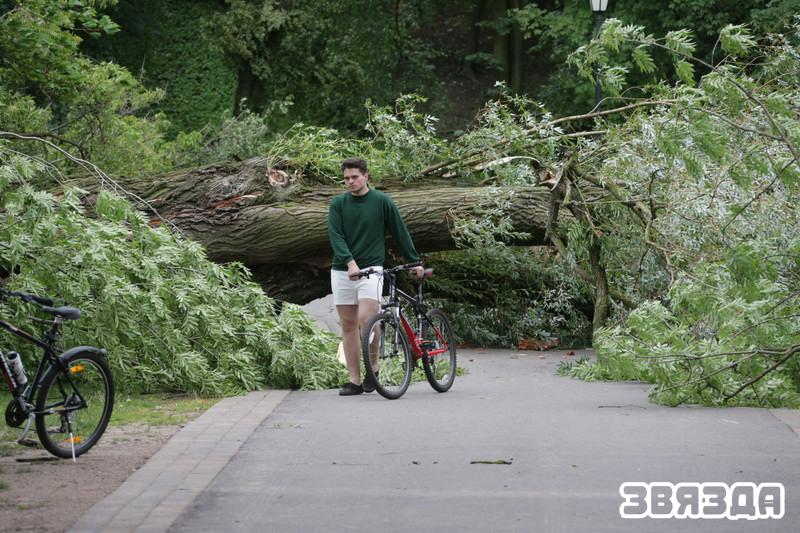Во время стихии в Лошицком парке рухнуло более трехсот вековых деревьев