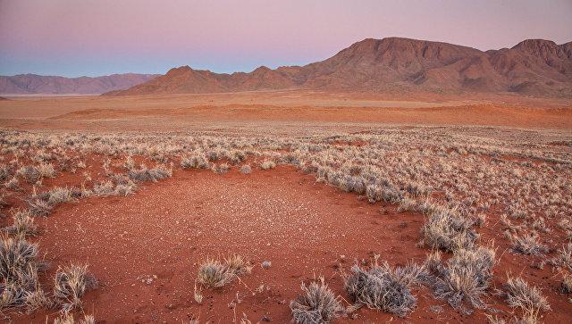 Ученые узнали, кто чертит таинственные «круги натраве» вАфрике