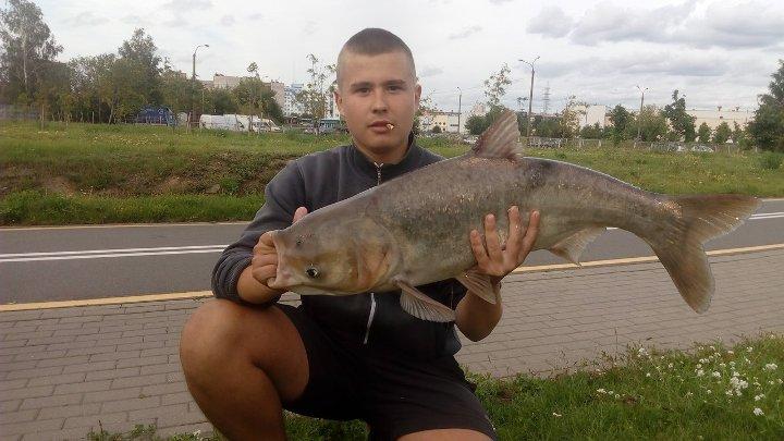 толстолобик рыбалка утром